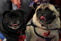 video therapy dogs help children improve reading