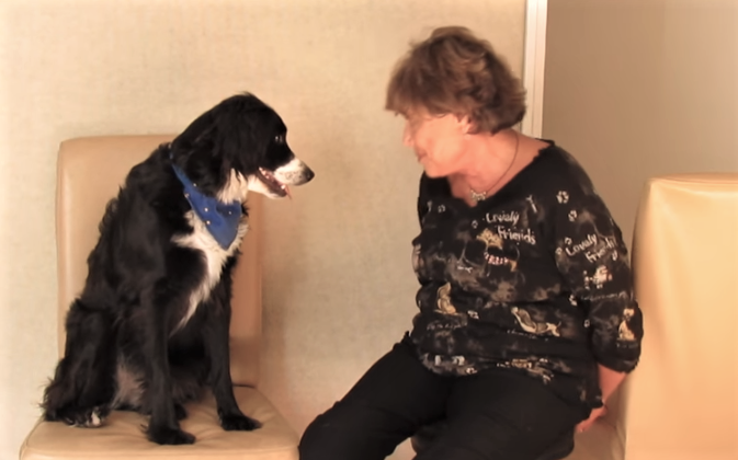 video dog doing difficult math problems