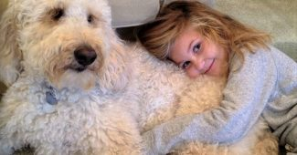 video Labradoodle service dog helps young girl