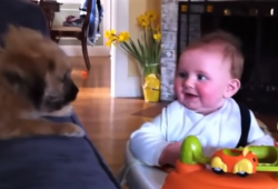 video of puppies and babies adoring each other