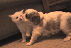 video puppy and kitten becoming friends