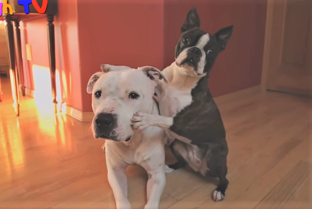video dogs hugging each other
