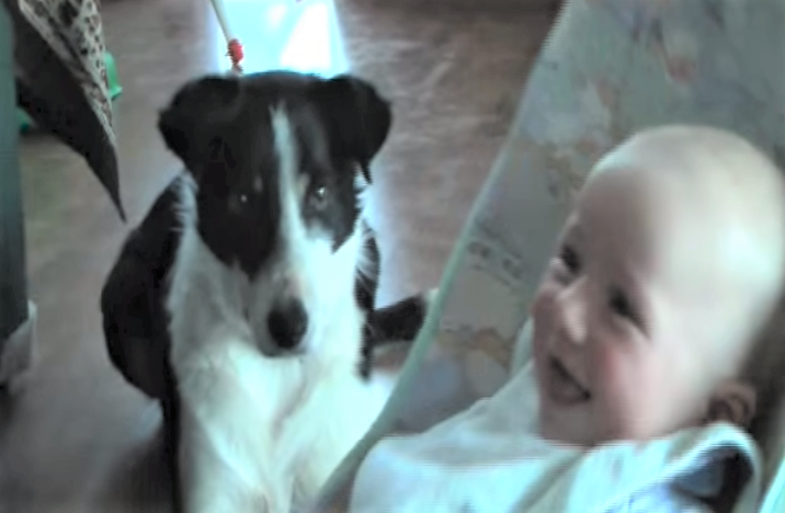 video Border Collie babysitting