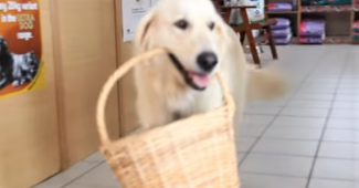 video retriever shops by herself