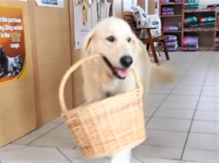 video retriever shops by herself