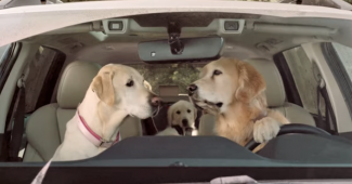 video Subaru dog commercial at the car wash