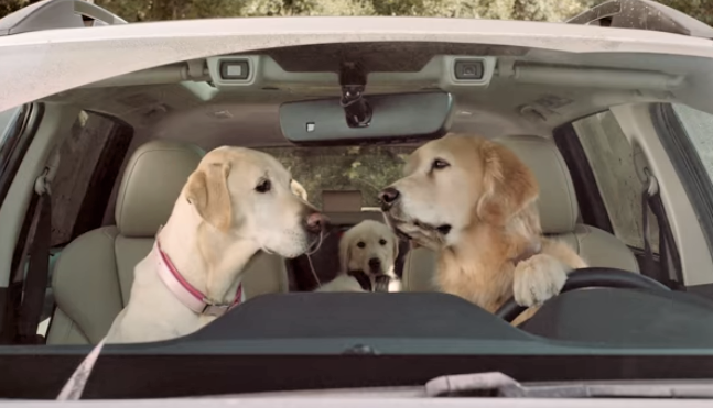 video Subaru dog commercial at the car wash