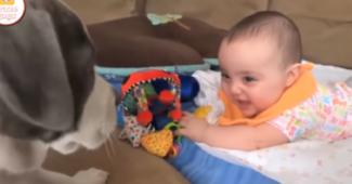 video puppies entertaining babies