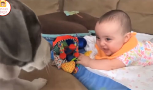 video puppies entertaining babies