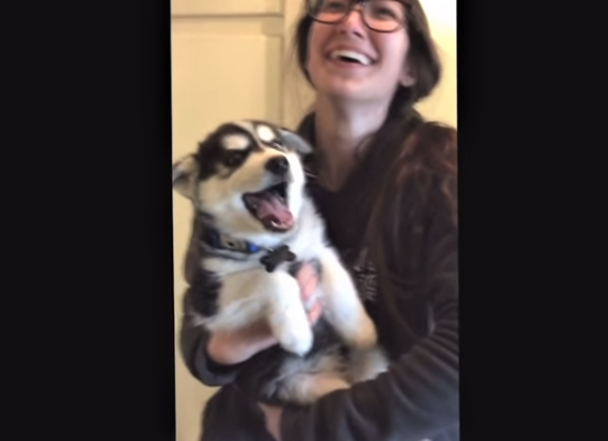 video Husky puppy sounds human