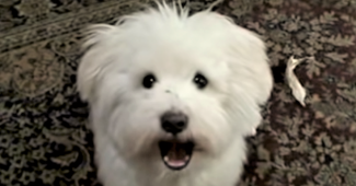 video dog learning to sing