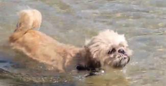 dog swimming at the beach