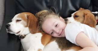 video little girl snuggling with Beagle dogs